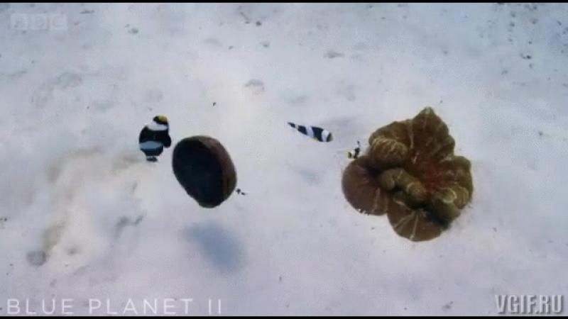 иеху рыбки играют с ракушкой mp4