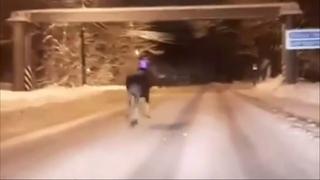 Лось гуляет по городу Малая Вишера