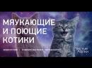 Смешные котики. Часть 10. Видеоподборка от канала The Pet Collective.