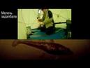 Рыбалка на Сухом море. Железные ворота. Подводная и надводная съемка. 22 23,03,19
