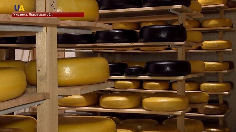 На Львовщине молодой фермер Назар Кмить основал сырную ферму