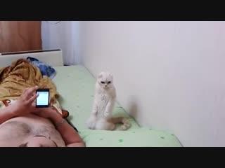 Полный ржач, кот патриот слушает гимн России, лучшие приколы над животными 2016 май, угар!
