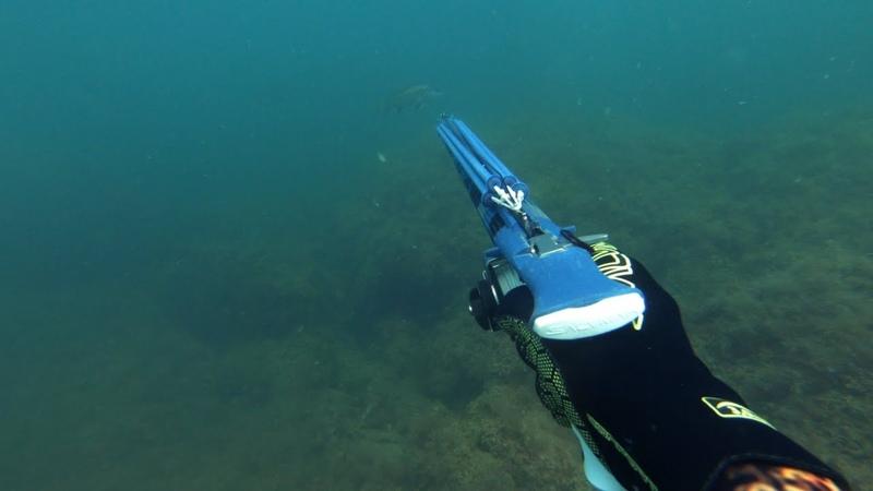 Подводная охота на горбыля.