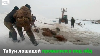 Лошади провалились под лед. Их вытаскивали трактором