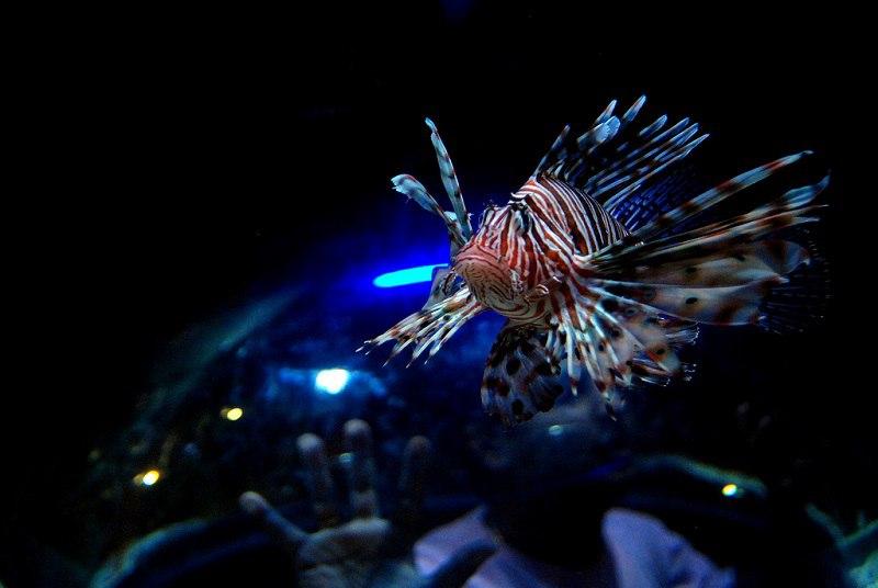 Крупнейший в мире аквариум в ТРЦ Дубай Молл, ОАЭ, изображение №6