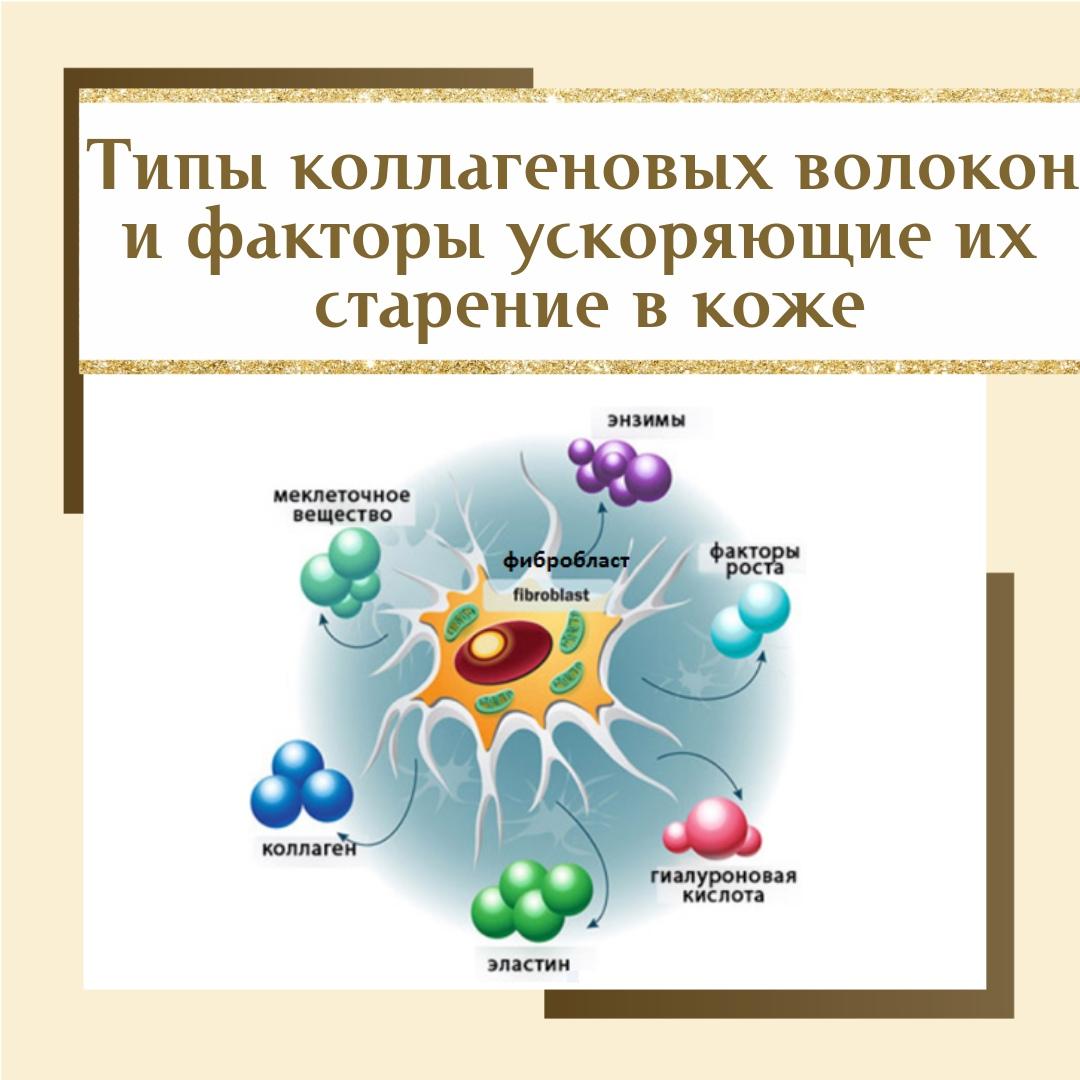 Типы коллагена в коже и что способствует его старению., изображение №1