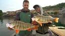 A Pesca dei PERSICI GIGANTI del lago d'Orta - Monster Perch Secrets