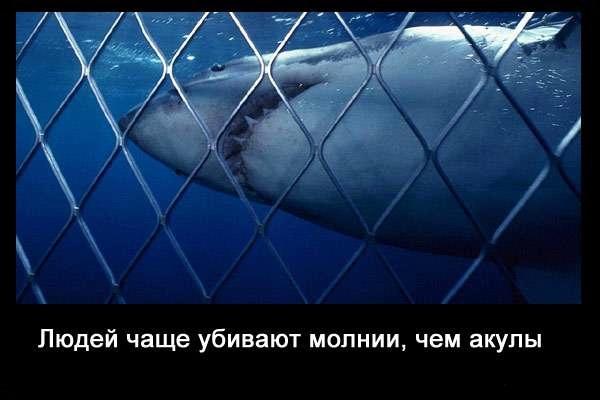 Valteya - Интересные факты о акулах / Хищники морей.(Видео. Фото) - Страница 2 -dYKTHAGWdc