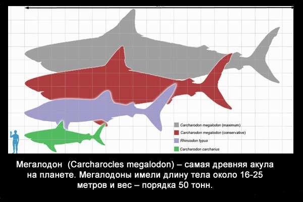 Valteya - Интересные факты о акулах / Хищники морей.(Видео. Фото) - Страница 2 NUam1BbuZT4