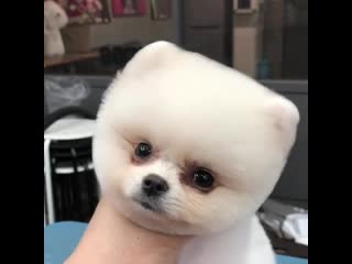 Gifsmix video dog