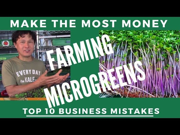 Don't Lose Profit By Making these 10 Microgreens Farm Business Mistakes