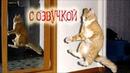 Приколы с котами с ОЗВУЧКОЙ – СМЕШНЫЕ КОТЫ и КОШКИ 2019 до СЛЁЗ - PSO