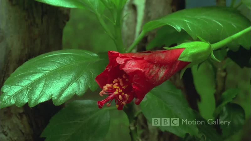 Bbc motion gallery hd in full bloom