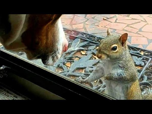 Белка стучалась в окно каждый день, только спустя несколько дней они поняли почему!