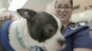 Повышение квалификации ветеринарных ассистентов / Elevating Veterinary Technicians