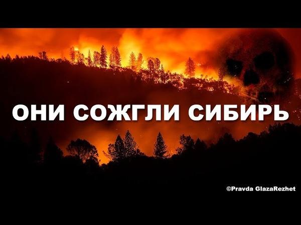 Лесные пожары устроили... Они сожгли Сибирь - это геноцид   Pravda GlazaRezhet