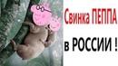 Лютые приколы. СВИНКА ПЕППА В РОССИИ Попробуй не засмеяться! Самое смешное видео! – Domi Show!