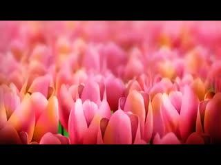 С добрым утром! Нежного весеннего утра и хорошего дня! Чудесного на ( 360 X 640 ).mp4