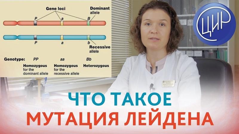 ЛЕЙДЕНСКАЯ МУТАЦИЯ Что такое мутация Лейдена и как она влияет на гемостаз Кочанжи М И