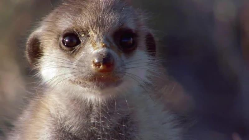 BBC Жизнь III Млекопитающие