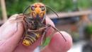 Они обязательно вас укусят! Самые агрессивные насекомые на планете!
