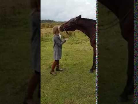 Лошадь Гуля целуется с моделью)