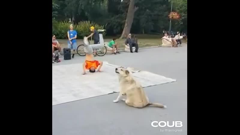 Freestylo dog