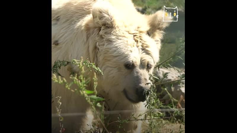 Приют Белая скала место где живут медведи после рабства ghb n tkfz crfkf vtcnj ult bden vtldtlb gjckt hf cndf