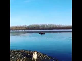 В Бийске спасли школьника оказавшегося на льдине (, Бийское телевиление)