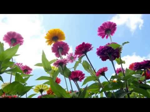 Цветочные поляны Швейцарии Spase