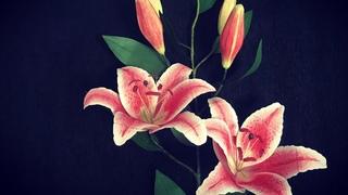 Bella's Craft/ How to make Lily flowers by crepe paper/ Hướng dẫn làm hoa ly bằng giấy nhún