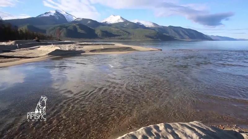 Баргузинский заповедник Байкал 2020 Дикая Сибирь Медведи на берегу Байкала Заповедная Россия