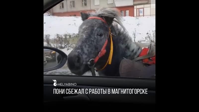 Пони сбежал с работы в Магнитогорске