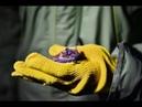 Центр реабилитации рукокрылых Фельдман Экопарк спас летучих мышей в одной из многоэтажек Харькова