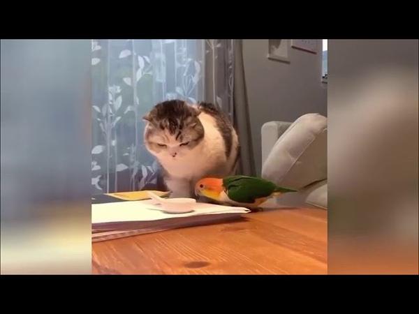 Поединок попугая с котом за еду рассмешил пользователей Сети