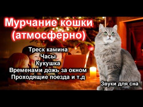 Мурчание кошки Звуки для сна acmp asmr sounds for sleep purring cats