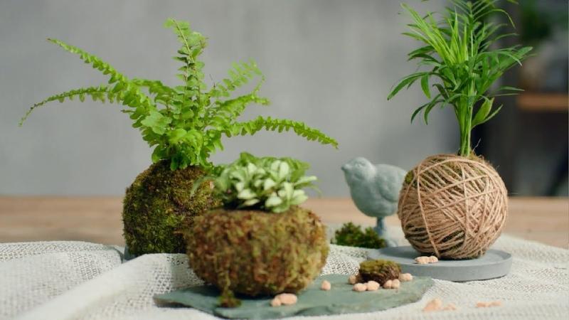"""《焰火花园》33 绿植新玩法!教你做最文艺的球状 苔玉"""",变身日本园艺大师"""