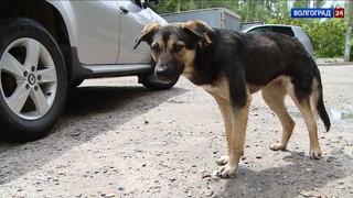 Бродячие собаки атакуют: как в Волгограде регулируют численность животных