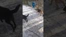 Выгул приютских собак на Южном кладбище г Пермь