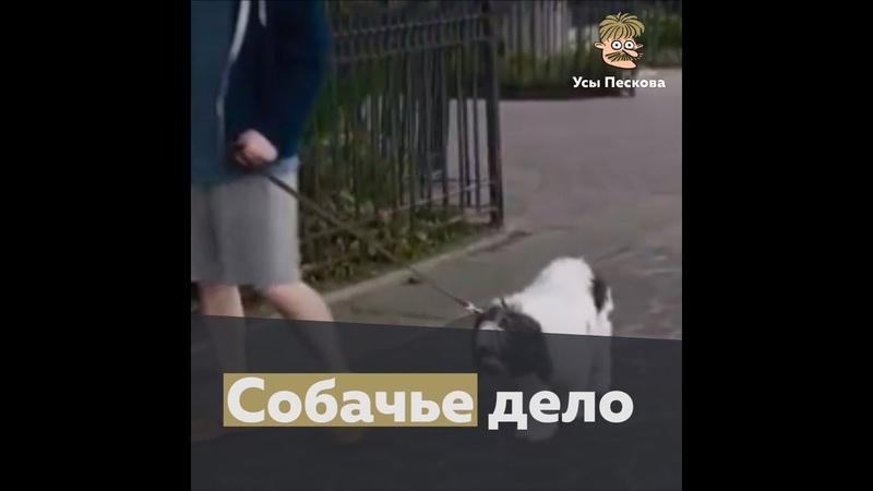 Собачье дело
