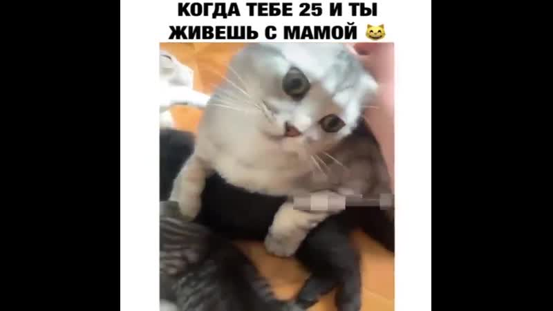 Котик переросток
