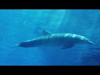 """Рубрика """"Животные мудрости"""". Будь как дельфин!"""
