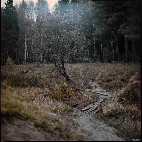 мытищи лес фото октябрь