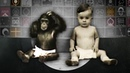 Can Apes Really Talk To Humans?