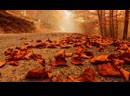 Проект-А - С неба падают листья ( Кризис)