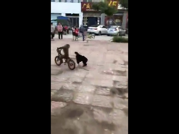 Andando de bicicleta correndo de cachorro