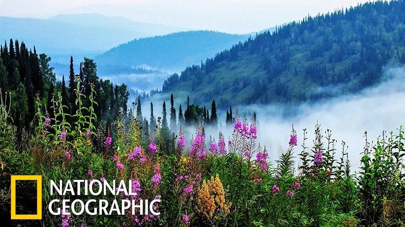 Дикая природа России Сибирь Фильм 1 из 6 National Geographic