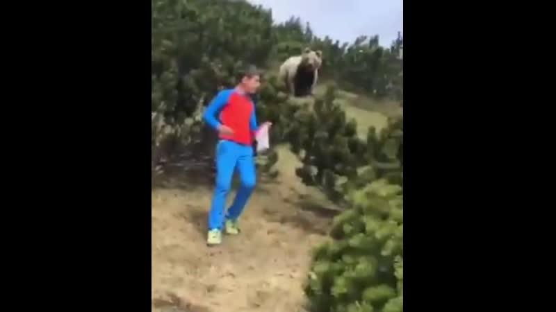 🐻Как поседеть в 12 лет Отец с сыном встретили медведя в горах Италии