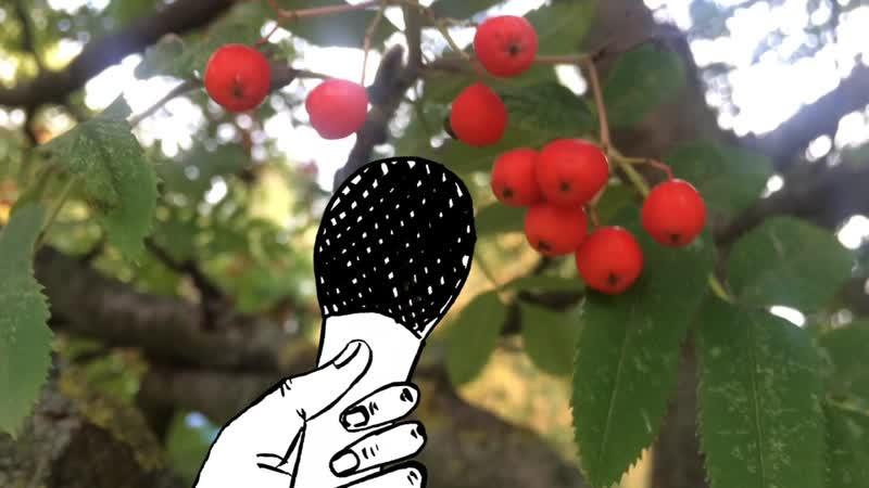 РАСТИТЕЛЬНЫЙ ВЕСТНИК СЕЗОН 6 ВЫПУСК 2 PLANT REPORTER SEASON 6 EPISODE 2 ENGLISH SUBTITLES