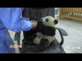 Маленькая панда: я пью молоко лишь в твоих объятьях.